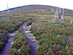 Site-of-Battle-of-Corrichie