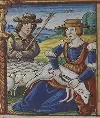 Sheep-Shearing-3