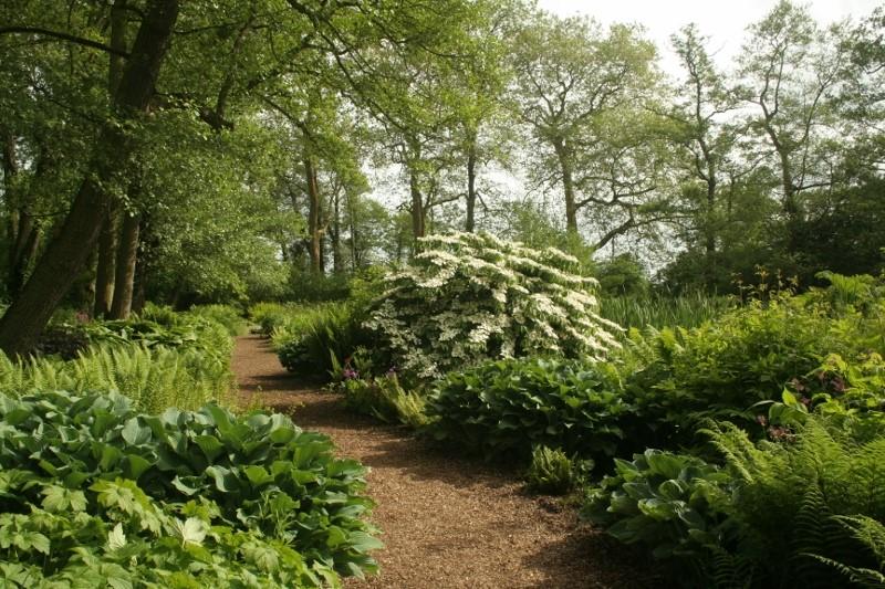 The-Bog-Garden