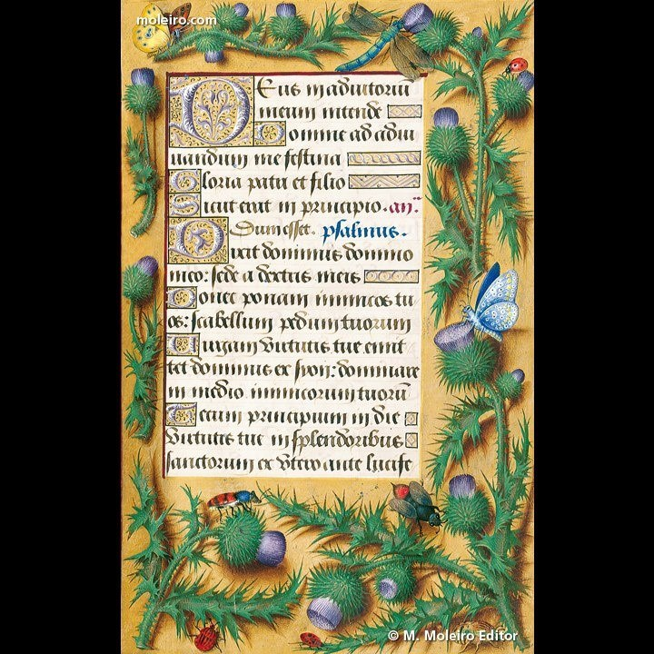 Anne Of Brittany Book Of Hours 2 © M Moleiro